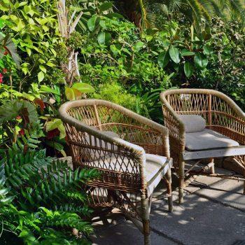 Оранжерея Таврического сада